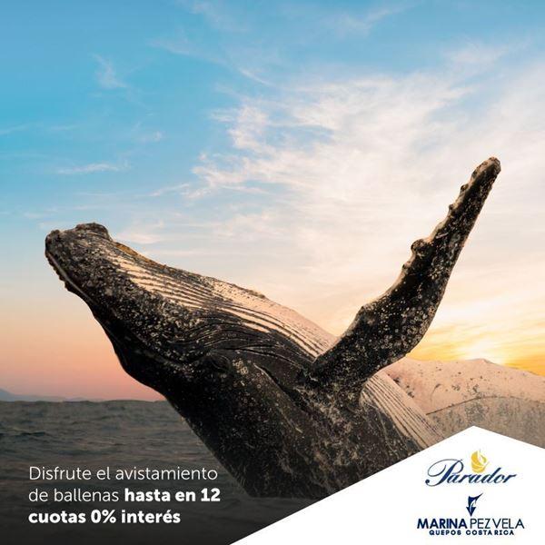 Foto de Avistamiento de ballenas hasta en 12 cuotas 0% interés